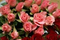 roses-bouquet-botanicBeautiful-Flower-Wallpapers-1080p-goog-smellsflowers-free_1920x1200